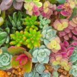 Композиция от сукуленти за дома и градината