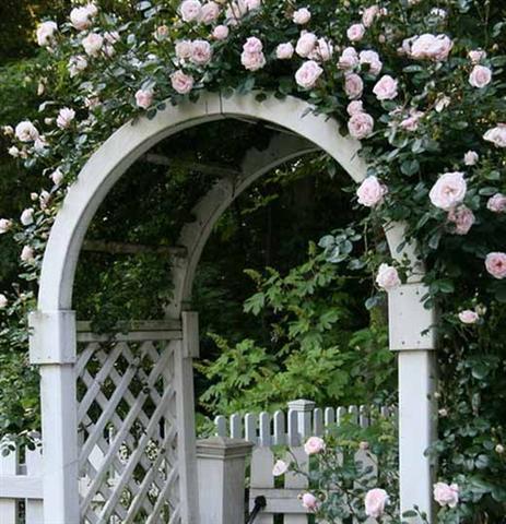 arca ot rozi (10) (Small)
