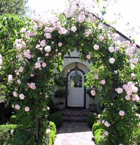 arca ot rozi (18) (Small)