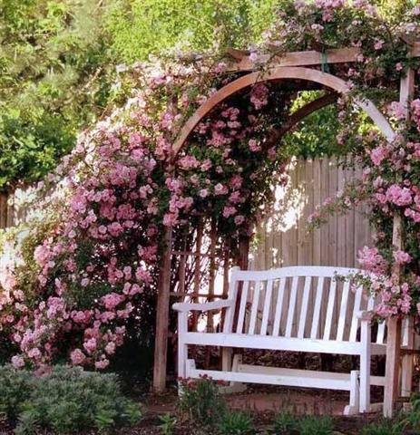 arca ot rozi (21) (Small)