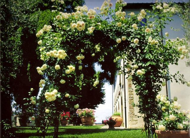 arca ot rozi (24) (Small)