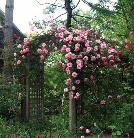 arca ot rozi (3) (Small)