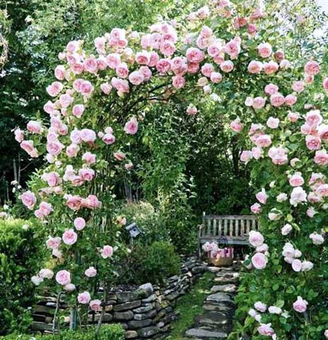 arca ot rozi (4) (Small)