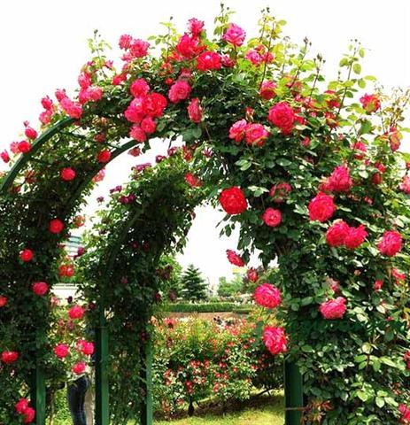 arca ot rozi (7) (Small)