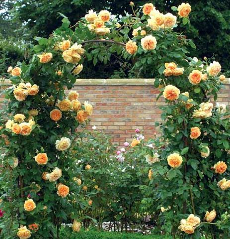 arca ot rozi (8) (Small)
