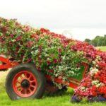 "Декорация за градина: Как се прави ""цветен ручей""?"