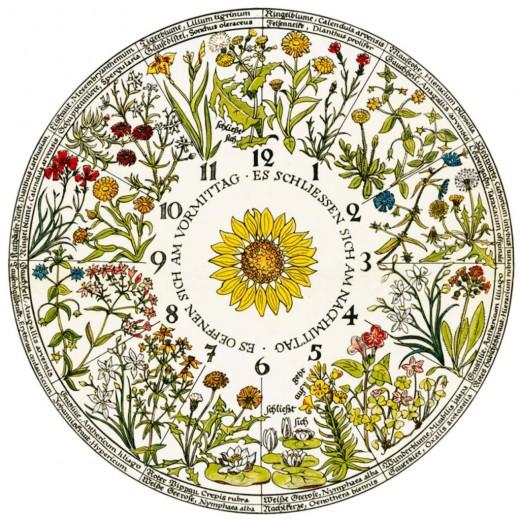Схема на цветен часовник на Карл Линей