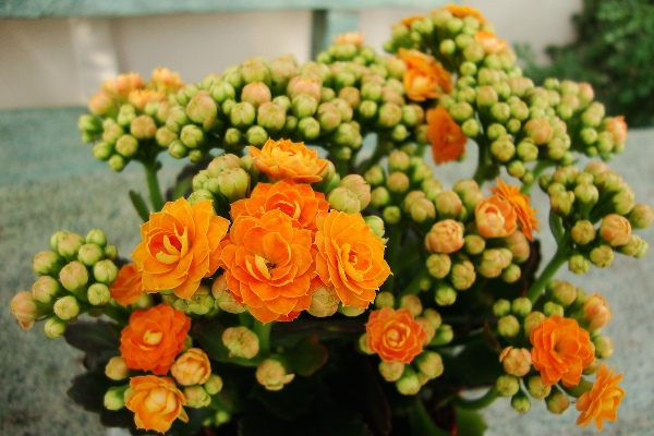 Саксийни цветя за овлъжняване и изсушаване на въздуха