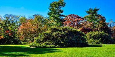 Градина по конец: Къде и как да посадим дървета и храсти