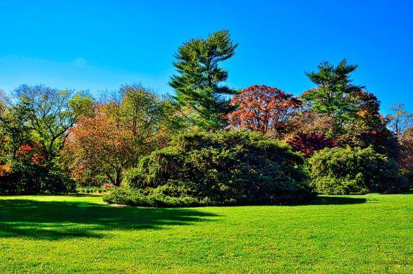 Правила за засаждане на дървета