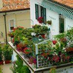 Цветя на балкона: Какви държачи да изберем и какви видове да посадим