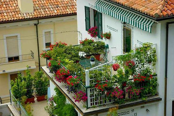 Какви цветя на балкона да използваме
