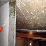 Премахване на влага и мухъл от мазето завинаги
