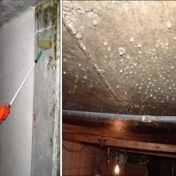 Как да премахнем влага и мухъл от мазето завинаги?
