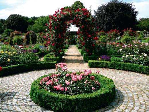 Стандартен розариум в градината