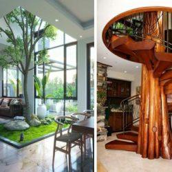 Дърво в къщи - жива декорация в интериора