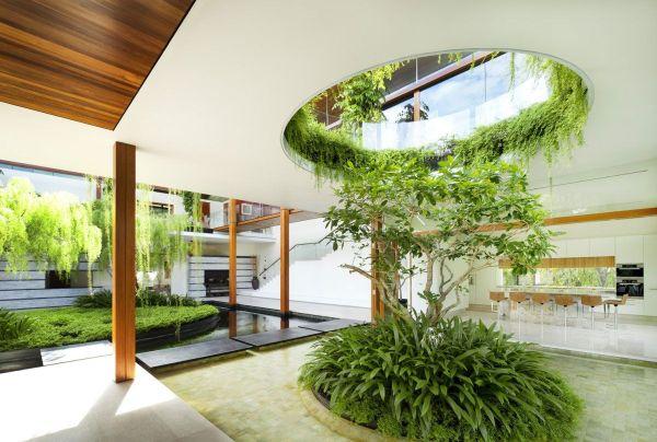 Как се отглежда дърво вкъщи идеи и съвети