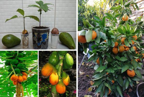 Eкзотични дървета, които може да отгледате от семки у дома