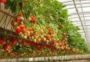 Хидропоника: Отглеждане на растения без почва (и във въздуха)