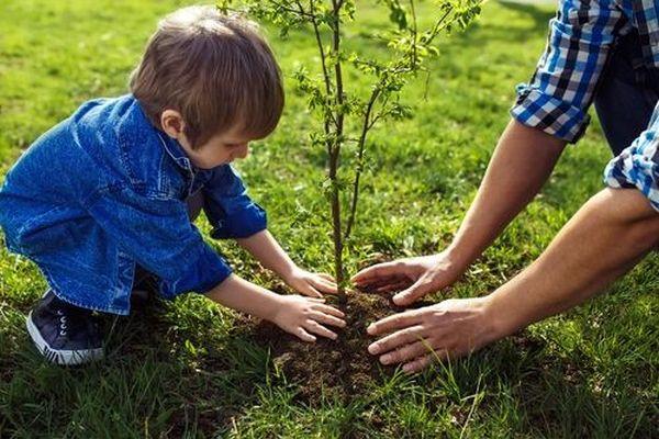 Засаждане на дърво: Съвети, ритуали и суеверия